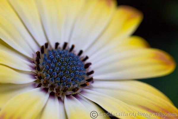 Plant Life & Gardens