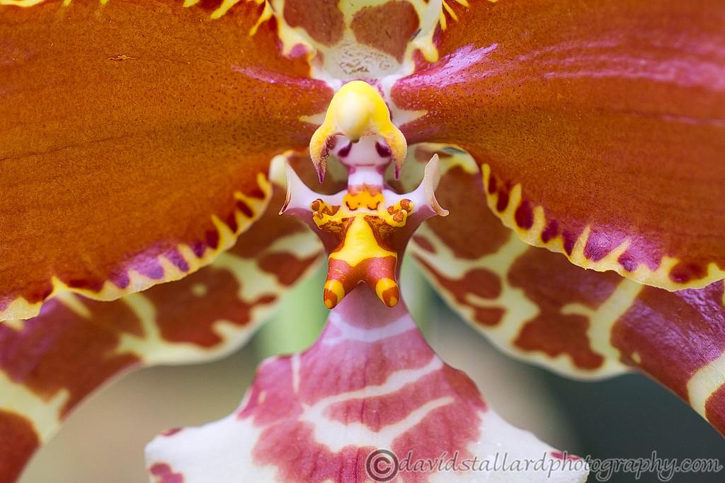 IMAGE: http://www.davidstallardphotography.com/Plant-Life/RHS-Wisley/RHS-Wisley-30-12-14/i-KnbDm7G/0/XL/RHS%20Wisley%2030-12-14%20%20114-XL.jpg