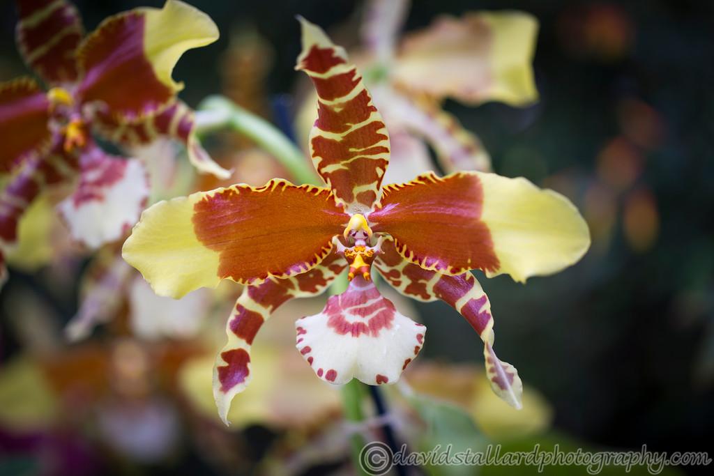 IMAGE: http://www.davidstallardphotography.com/Plant-Life/RHS-Wisley/RHS-Wisley-30-12-14/i-x2jpF4D/0/XL/RHS%20Wisley%2030-12-14%20%20113-XL.jpg