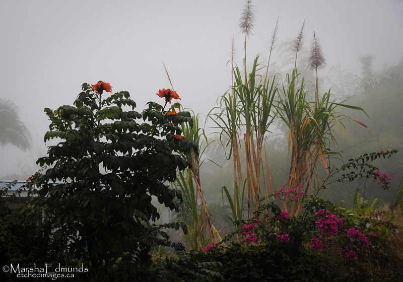 Colorful Beauty and Form in the Fog