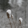 Kellogg Forest - Plants with Snow
