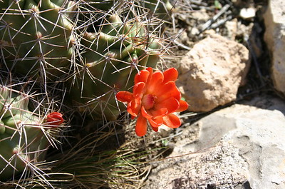 Cactus flower, somewhere in New Mexico