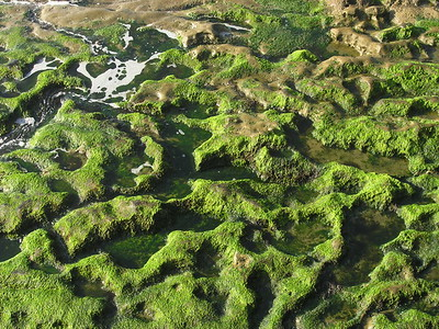 Moss at the Pacific Ocean, La Jolla, CA