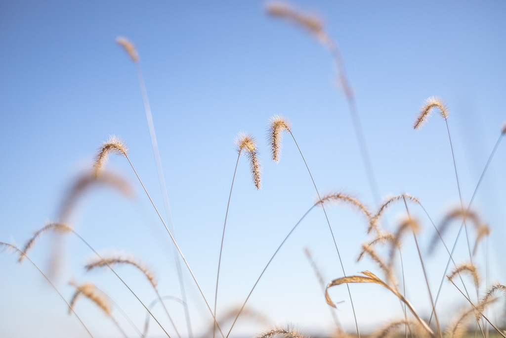 Flecks of cold in a crisp blue autumn sky.