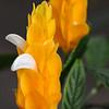 Candlestick Flower