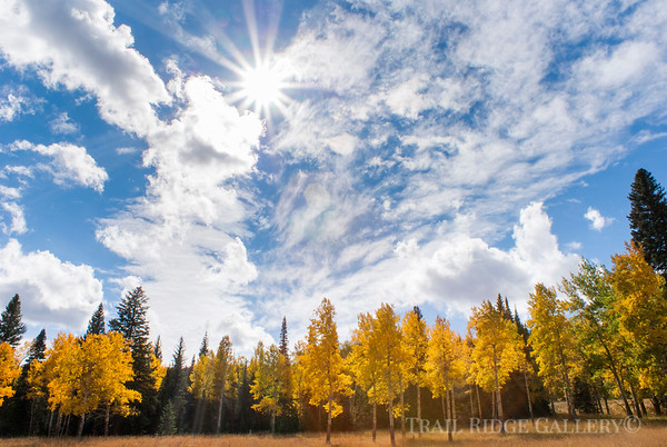 Autumn Gold Horseshoe Park
