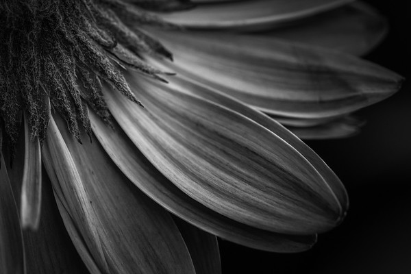 Sometimes a moody black and white just works! #macro #nature #clickpro