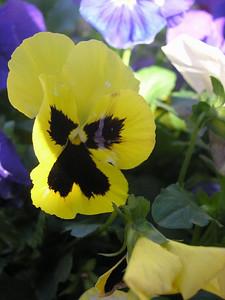 Garden Flowers, Wylie, TX
