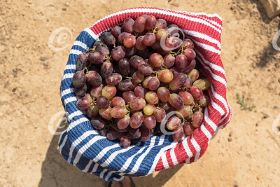 Large Bowl Filled with Ripe Red Table Grapes