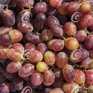 Closeup Macro of Ripe Red Table Grapes