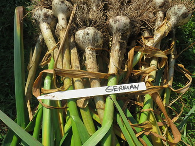 plant, rav & garlic