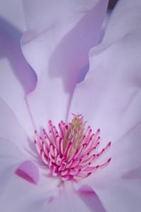 Spring blossom - 03