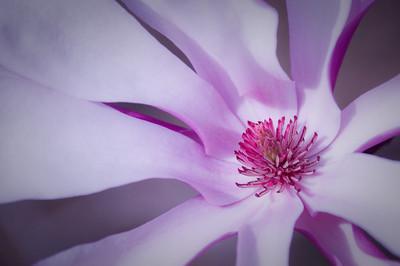Spring blossom - 02