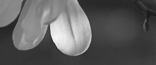 Spring blossom - 04