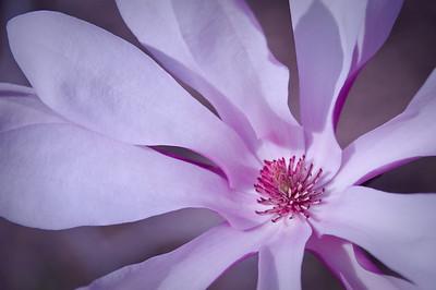 Spring blossom - 01