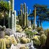 Hillside Cacti Garden