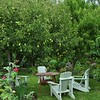 Orchard_setting