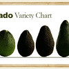 Avocado comparison chart:
