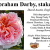Abraham Darby-staked