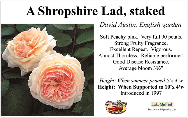 A Shropshire Lad-staked