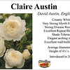 'Claire Austin' English rose