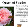Queen of Sweden-DA_card