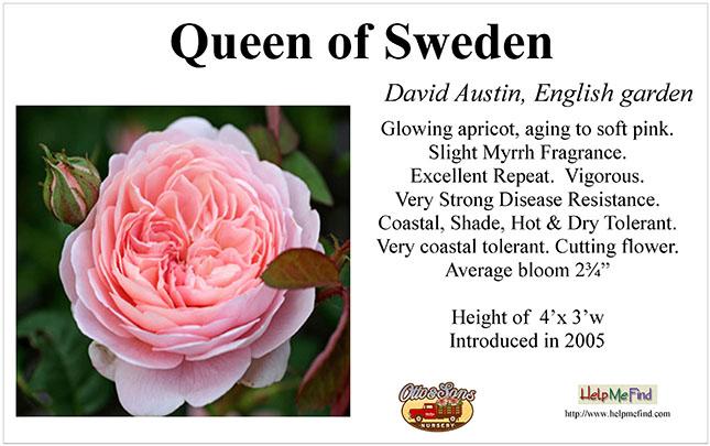 Queen of Sweden-DA_card