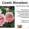 Gentle Hermione-DA_card