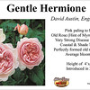 Gentle Hermione-DA_card