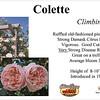 Colette-climb_card