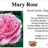 Mary Rose-EG_card