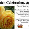 Golden Celebration-staked