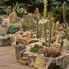 Succulents & Rocks