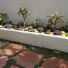 Mixed Succulent Bed