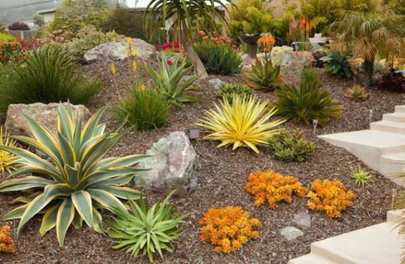 Exceptionnel Colorful Succulent Garden
