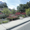 Dry garden - look Ma - no lawn!