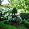 Formal garden<br /> Amazing Hydrangeas, design etc<br /> This garden is many years old & high maintenance/water needs (except Boxwood)