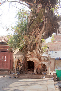 an old banyan tree growing on an old shrine in Nepal