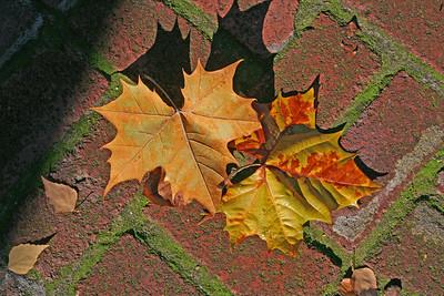 Autumn leaves on a brick walkway