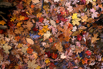 many colorful leaves in a pond