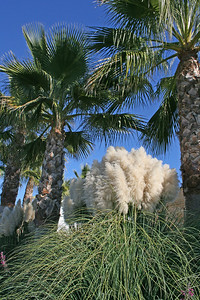 Lovely palm trees and reeds