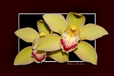 beautiful orchids isolated on mat and frame, beautiful orchids isolated on mat and frame