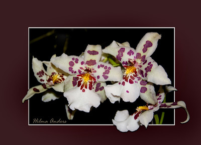 beautiful orchids isolated on mat and frame
