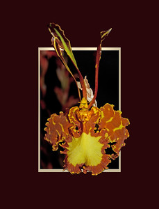 orchids with format suitable for greeting cards