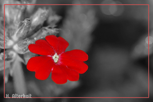Flowers - Special Effects