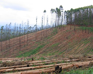 Timber production South Africa
