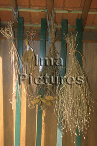 1-32-30 0157 herbs herbes kruiden
