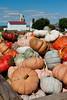 pumpkins,pompoenen,citrouilles,Strasburg,Pennsylvania
