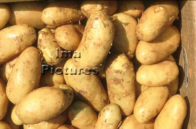 1-32-30 0303 vegetables groenten légumes potatoes aardappelen pommes de terre