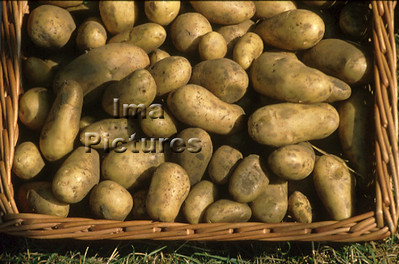 1-32-30 0023 vegetables groenten légumes potatoes aardappelen pommes de terre